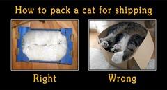pack-a-cat