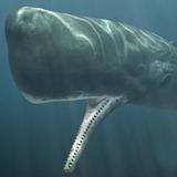 spermwhalemouth