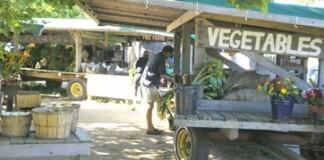 Farmers_Market_Bridgehampton_thumb.jpg