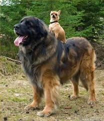 small-dog-big-dog