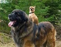 small-dog-big-dog_thumb.jpg