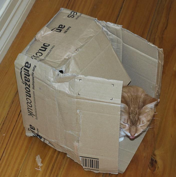 Cat_in_Amazon.co.uk_box small