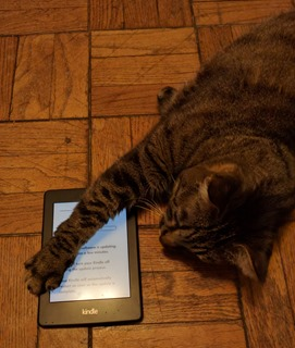 cat-kindle